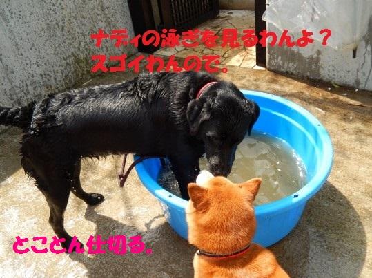 水浴び1-11