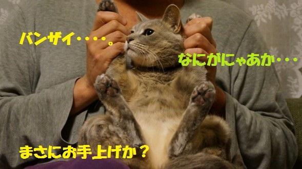 すず1-01