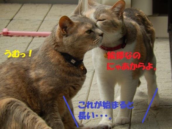 おかえし1-01