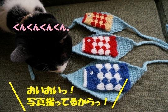 こいのぼり1-02