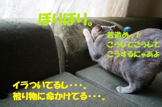 こいのぼり1-09