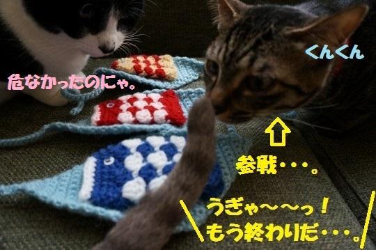 こいのぼり1-06
