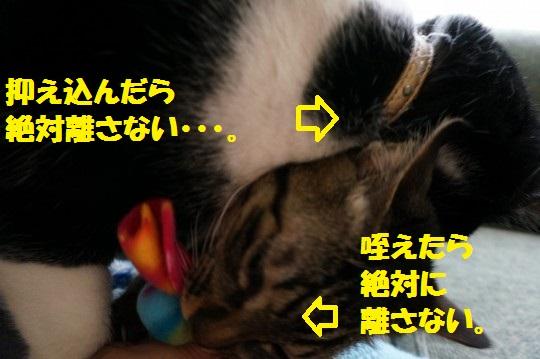 こいのぼり1-15