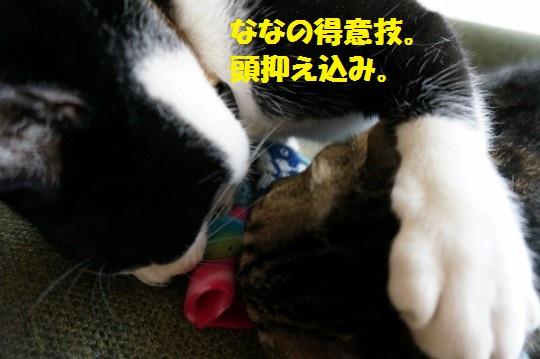こいのぼり1-14