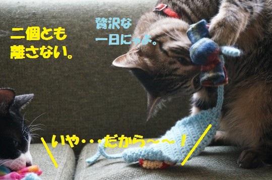 こいのぼり1-11
