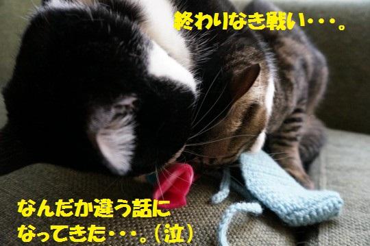 こいのぼり1-16