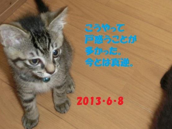 20140513-11.jpg
