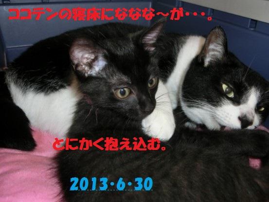 20140515-02.jpg