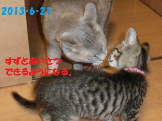 20140515-03.jpg