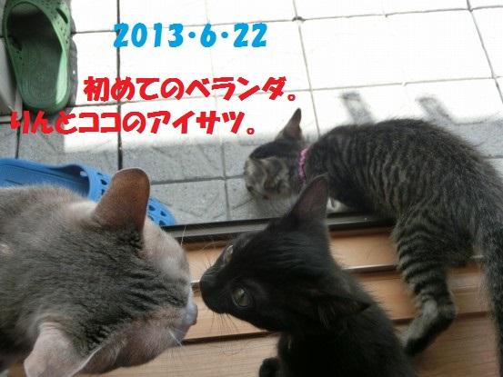 20140515-04.jpg