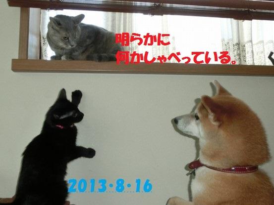 20140515-11.jpg