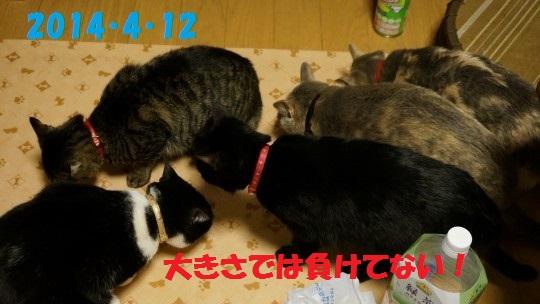 20140516-09.jpg