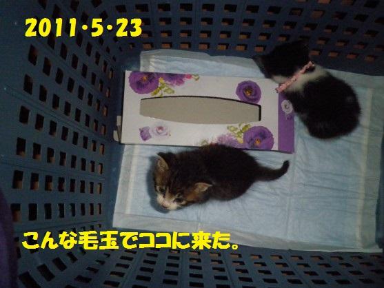 20140523-00.jpg