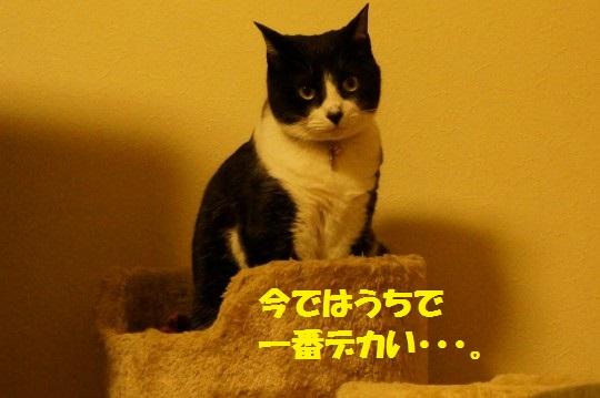 20140523-01.jpg
