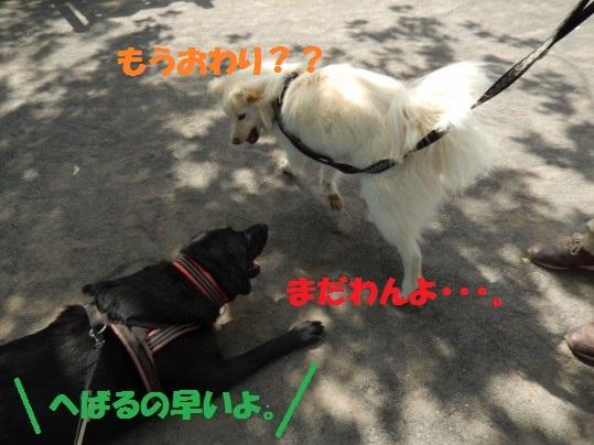 ヒースといっしょ1-05