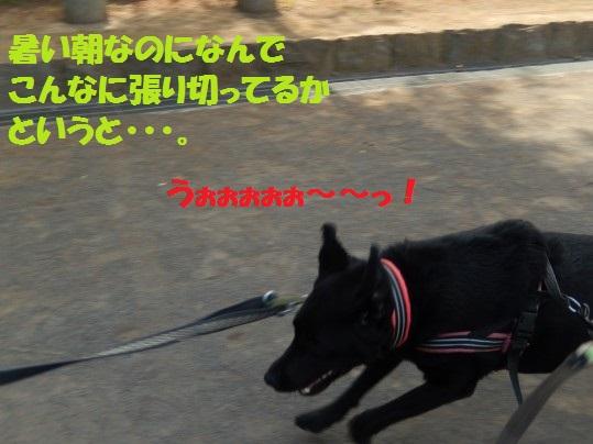 ヒースといっしょ1-01