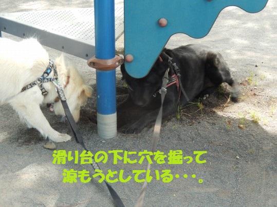 ヒースといっしょ1-08