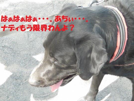 ヒースといっしょ1-07