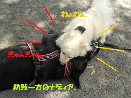 ヒースといっしょ1-06