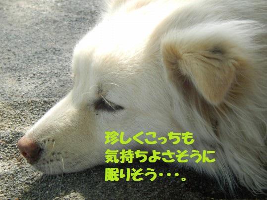 ヒースといっしょ1-13