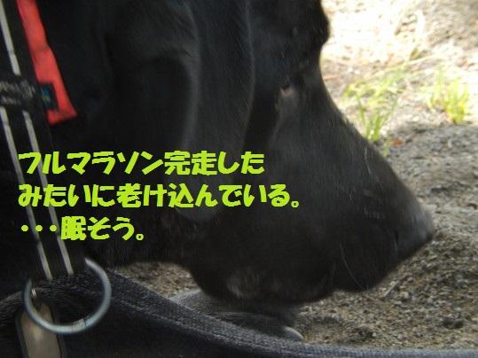 ヒースといっしょ1-12