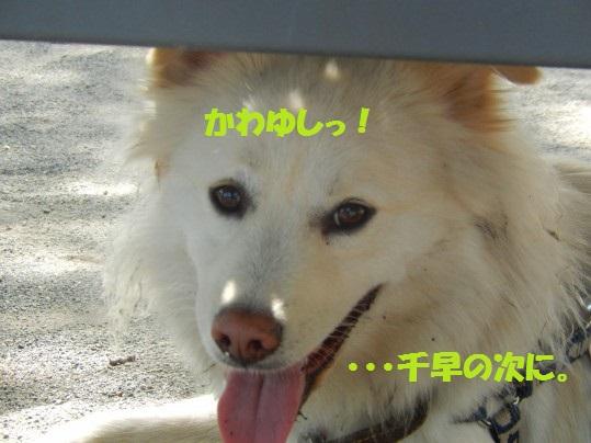 ヒースといっしょ1-11