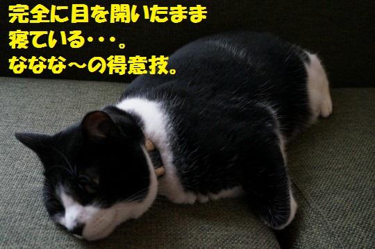 ねがお1-01