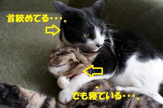 ねがお1-09