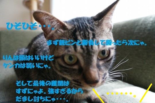 20140604-05.jpg