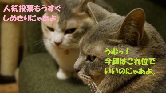 20140607-01.jpg