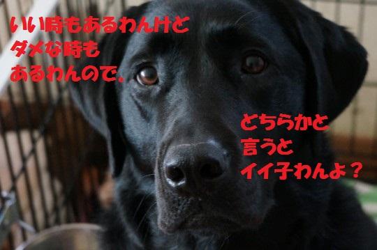 20140607-04.jpg