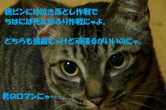 20140607-09.jpg
