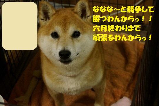 20140607-13.jpg