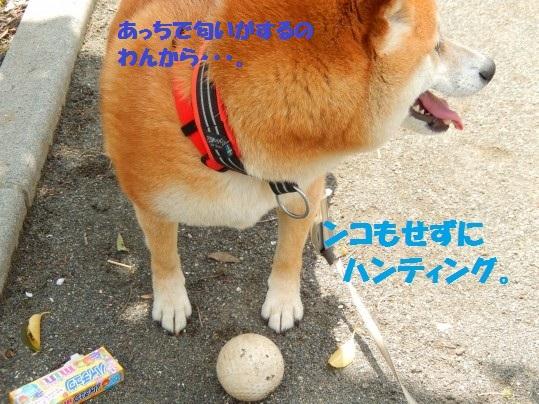 はんたー1-03