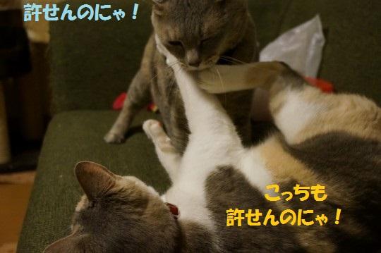20140613-01.jpg