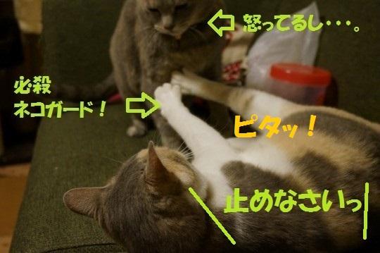20140613-03.jpg