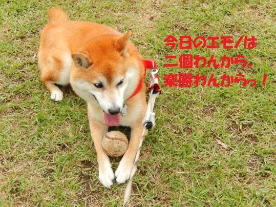 20140614-10.jpg
