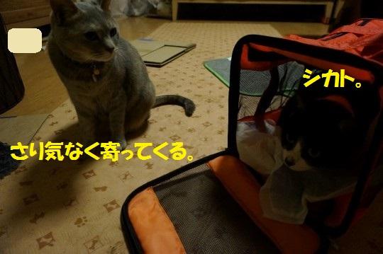 ななかく1-02