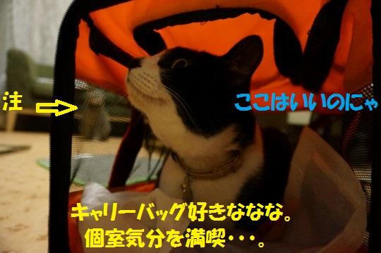 ななかく1-01