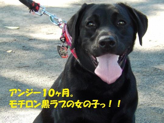 あんじー1-03