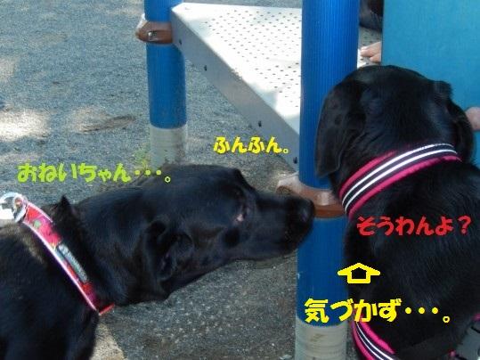 あんじー1-09