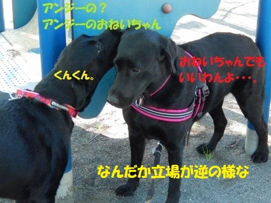 あんじー1-08