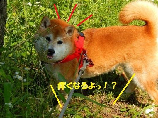 ななめ1-07