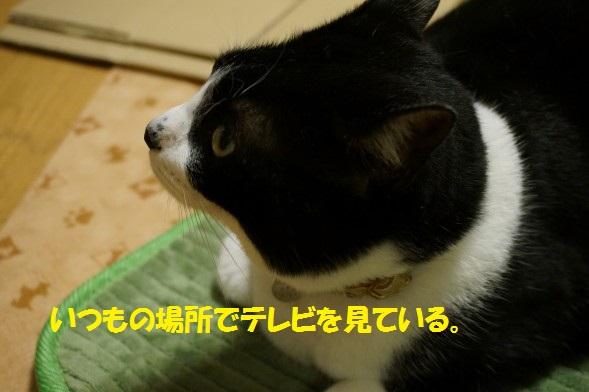 20140621-01.jpg