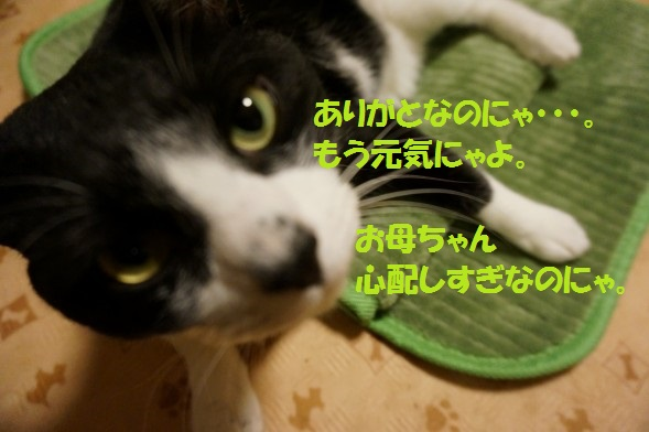 20140621-06.jpg