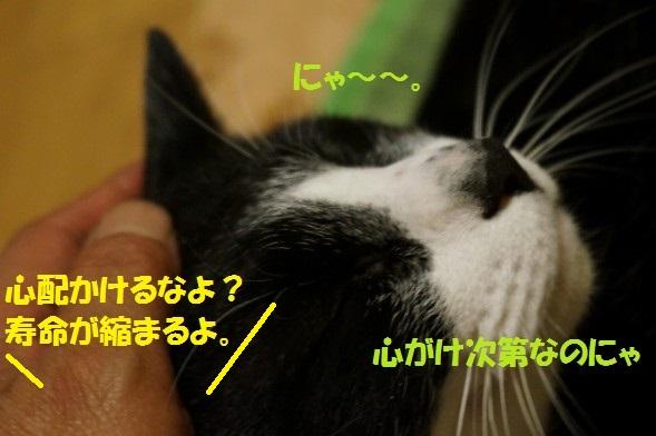 20140621-07.jpg