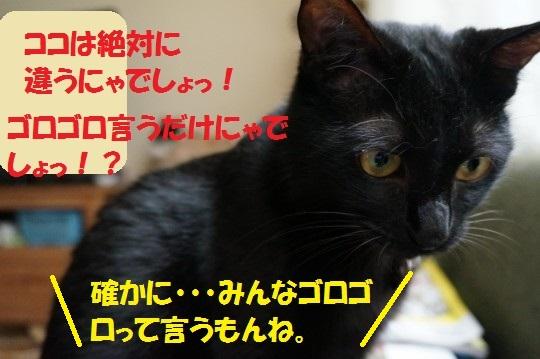 20140623-03.jpg