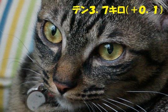 20140624-03.jpg