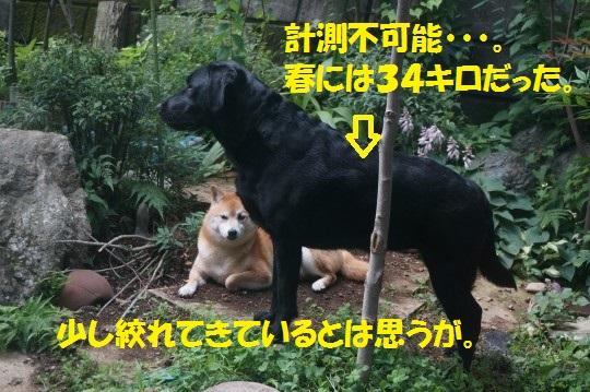 20140624-08.jpg