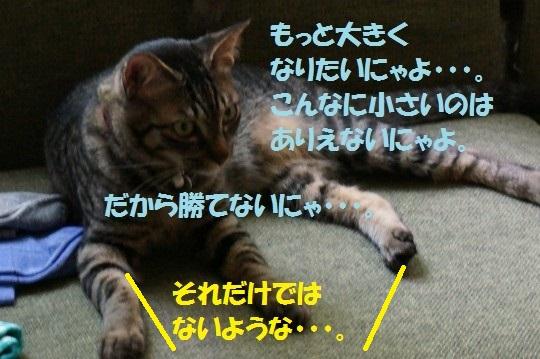 20140624-10.jpg